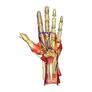 Common Wrist Injuries